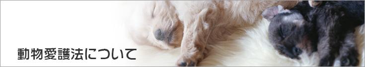 動物愛護法について