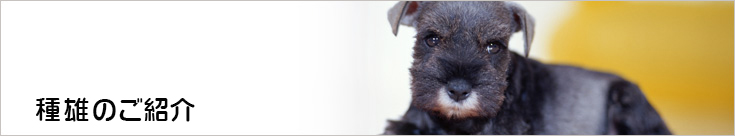 繁殖犬紹介